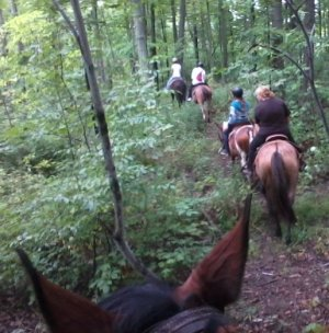 Canfield ON Horseback Trail Riding   Ontario Public Horse